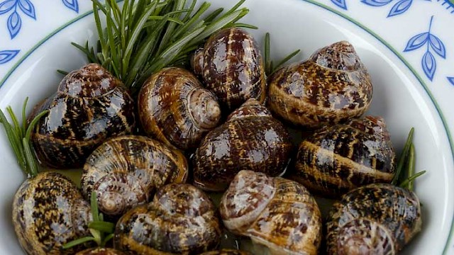 Fried snails